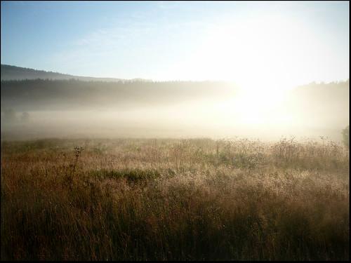 sun field fog sunrise scenery sweden marnäs
