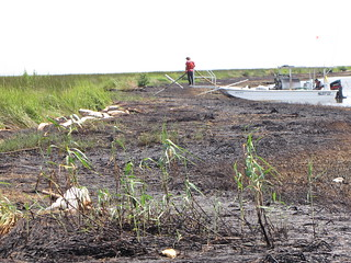 Barataria Bay (9/13/2010)
