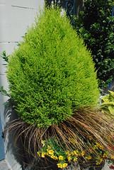 a shrubbery