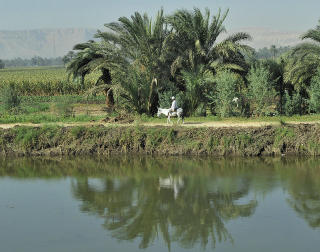am Nil1