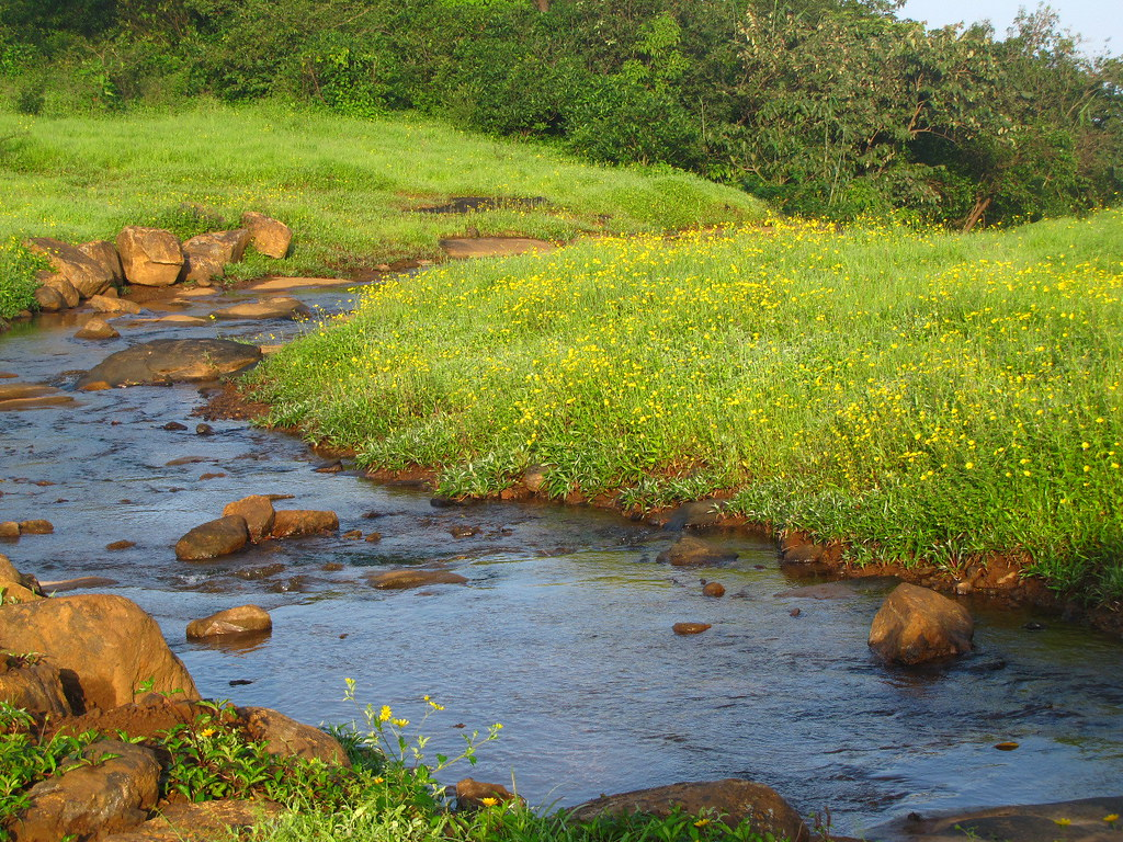 Ecosystem/Nature