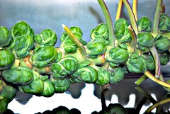 Stalk of Sprouts