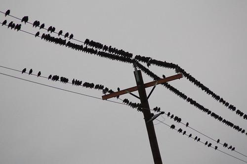 200+ Bird Huddle