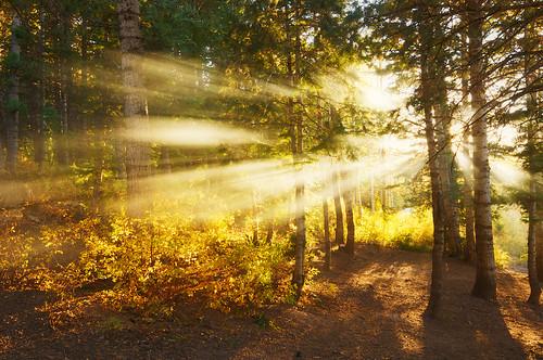 camping trees sun forest utah nikon smoke rays d90 americanfork