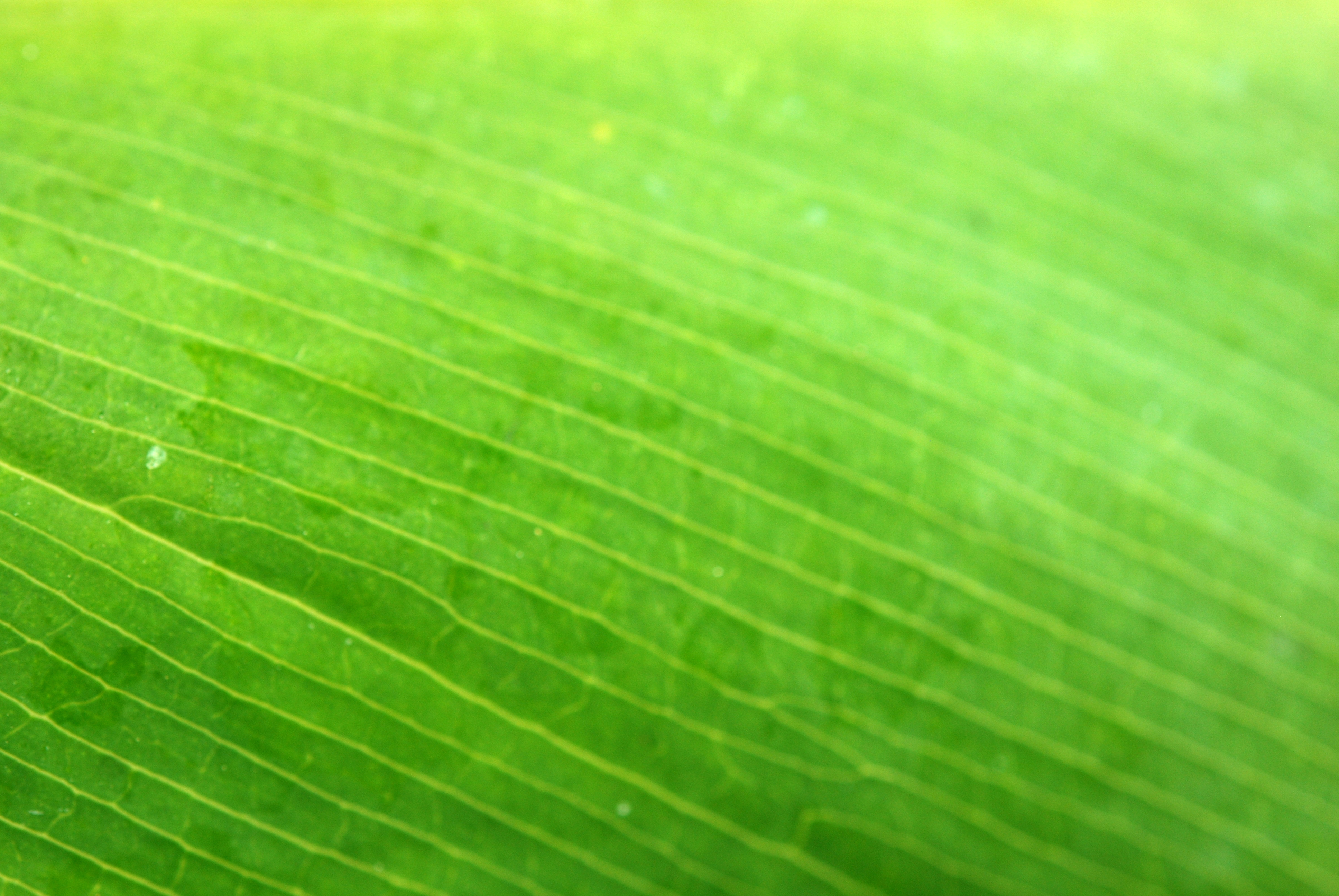 Hoja verde canarias creativa - Color verde hoja ...
