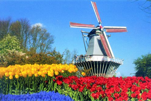 Tulpen en molen on Flickr