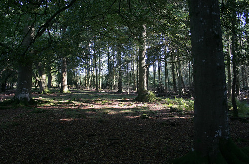 New Forest, Near Fritham