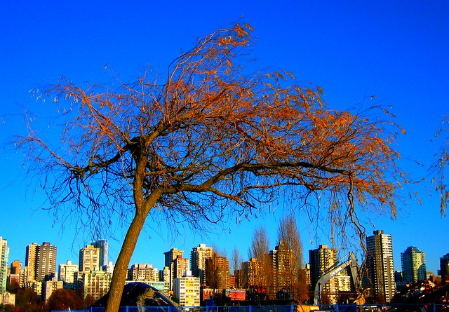 Image Result For A Tree Of
