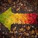 Autumn Spectrum 10/10/10 by Mr. dale