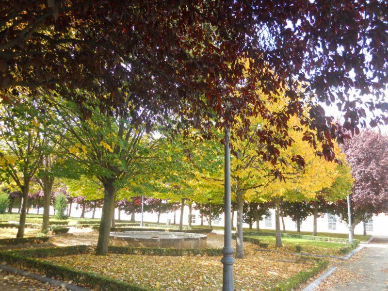 Tilo en otoño 3