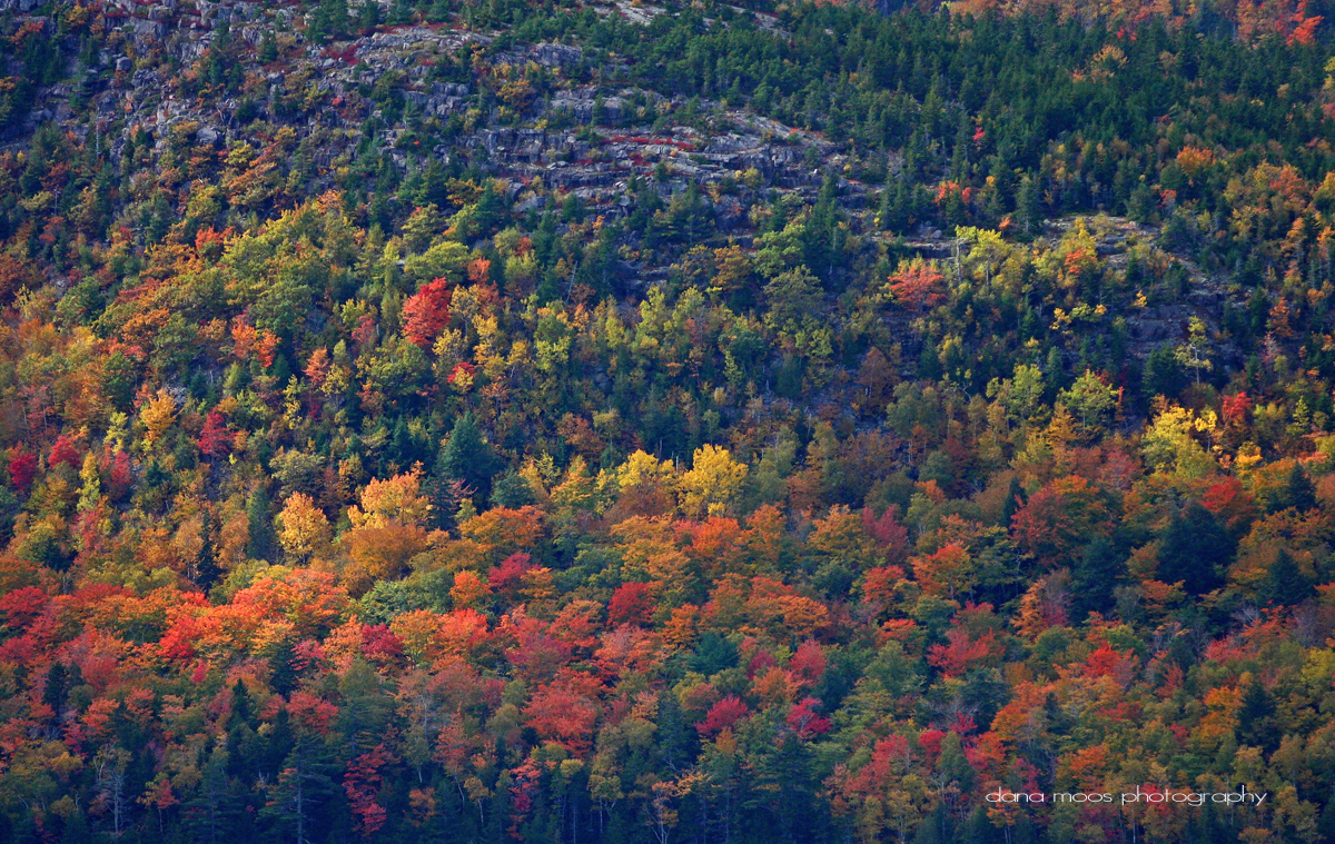 Autumn Foliage in Acadia National Park, #Maine by Dana Moos, on flickr