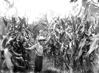 Tom Feaster standing in a corn field: Micanopy, Florida