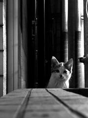 Today's Cat@2010-10-18
