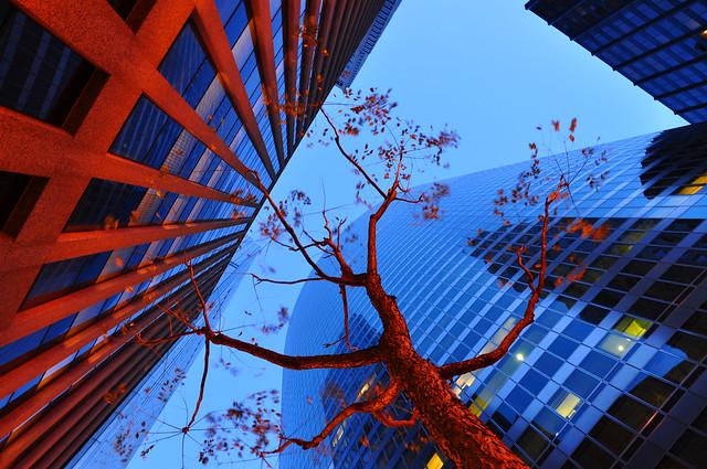 Árbol entre edificios de Chicago