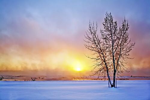 winter color tree fog sunrise interestingness montana explore explored platinumheartaward elitegalleryaoi mygearandmepremium mygearandmebronze mygearandmesilver mygearandmegold mygearandmeplatinum mygearandmediamond mygearandmeplatinium