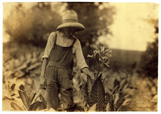 Lewis Hine: George Barbee, 13 years old topping, Nicholas County, Kentucky, 1916