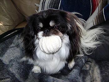 Doggietoy