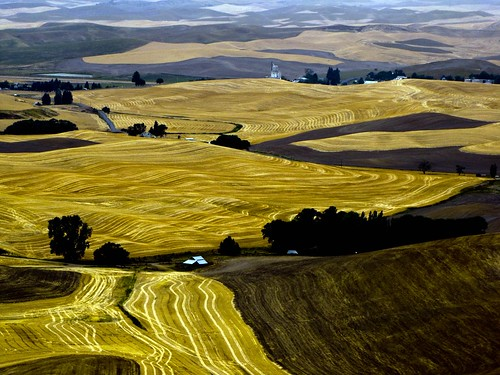 summer landscape wheat farming wa 2010 palouse 1bluecanoe