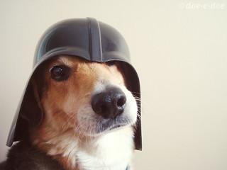 darth dog 2