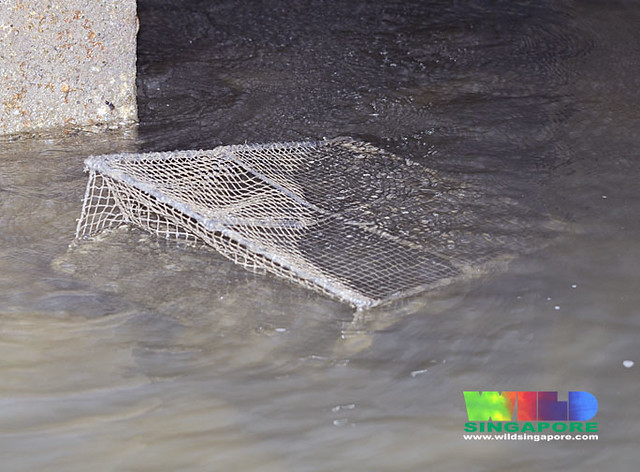 Fish trap on Changi