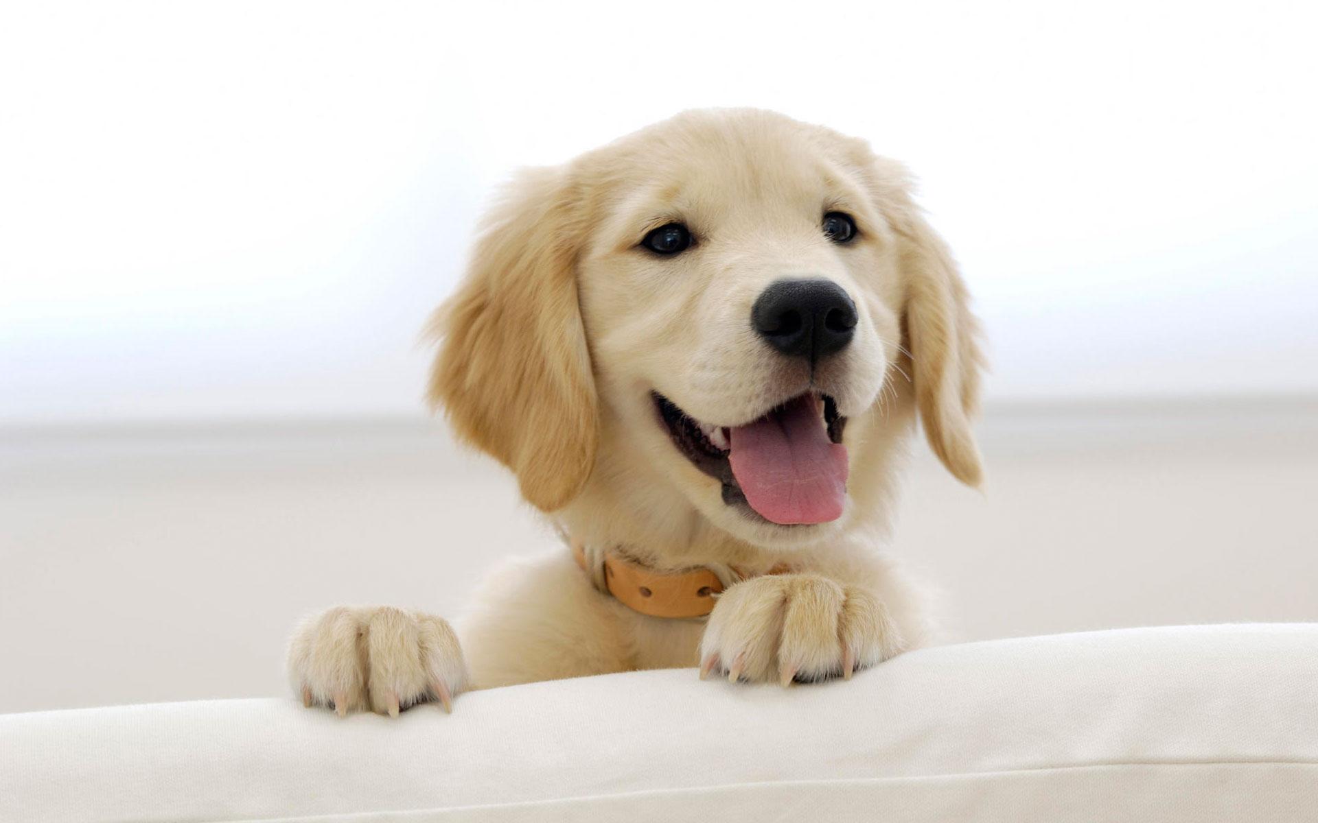Retriever Puppy Blend Dog Food