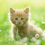 Cute Kitten by kitty.green66