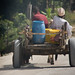Small photo of Pemba - Wete donkey car