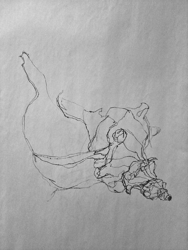 Continuous Contour Line Drawing : Life drawing one blind contour continuous line