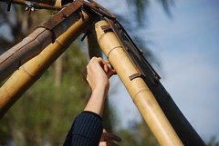 woodwind instrument(0.0), weapon(0.0), musical instrument(0.0), bamboo(1.0), close-up(1.0),