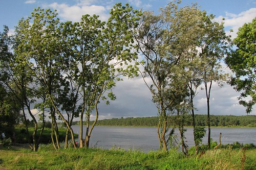 trees water river landscape poland wisła vistula mikoszewo