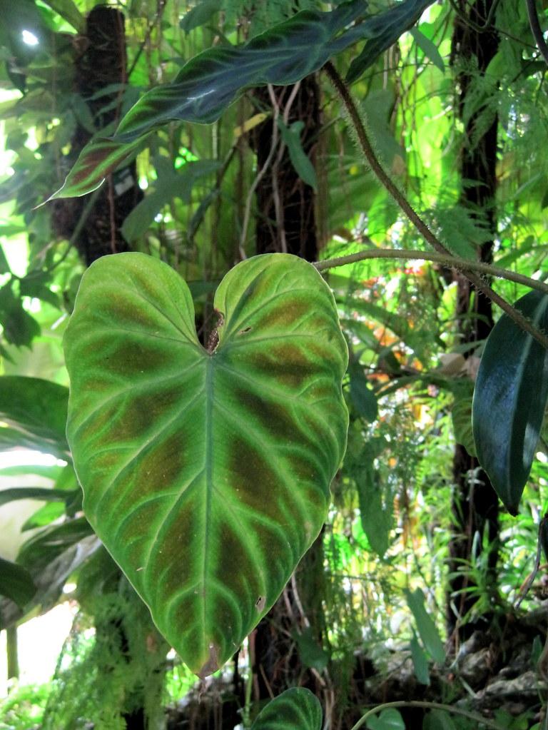 Jardin des plantes de Nantes - Détail feuille dans le pavi ...