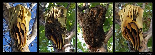 Feral Beehive thru the Seasons