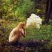 Creationism by Lissy Elle Laricchia