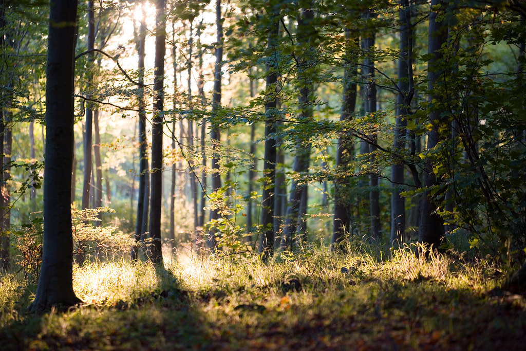 Friston Forest in Autumn