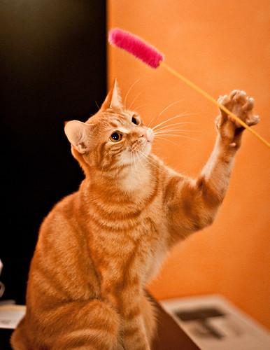 Gato jugando por Cheryl Lindo