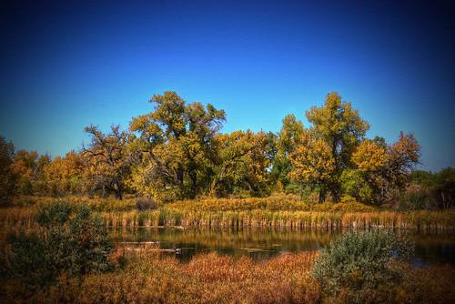 blue autumn trees sky fall nature landscape photography photo pond colorado image picture denver foliage swamp parker 201010