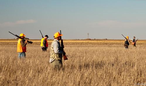 usa windmill field walking pheasant wheat hunting western kansas shotgun hunters sublett