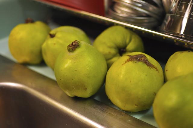 quince by the sink