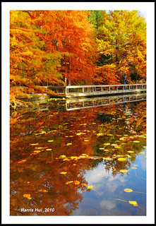 Fall Color of Cypress Pond - Van Dusen Botancial Garden Vancouver N5134e