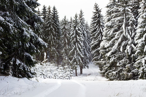 road trees winter snow pine sweden sverige spruces östergötland canon50mmf14usm bjärkasäby canoneos7d gettyimagesswedenq1