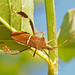 Leaf-footed Bugs - Photo (c) Jerry Oldenettel, some rights reserved (CC BY-NC-SA)