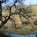 Rancho-San-Antonio-2011-01-16