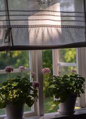 Sommarmorgon #fotosondag #sommarmorgon
