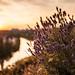 Sunset over river Neckar (IV) by Tarcitaxx [DE] [FR] [EN] [ES]
