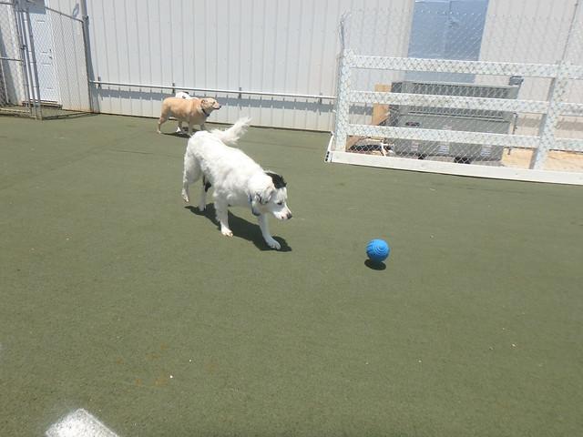 06_30_17 Football Play :-)