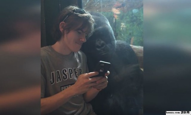 gorilla3_结果