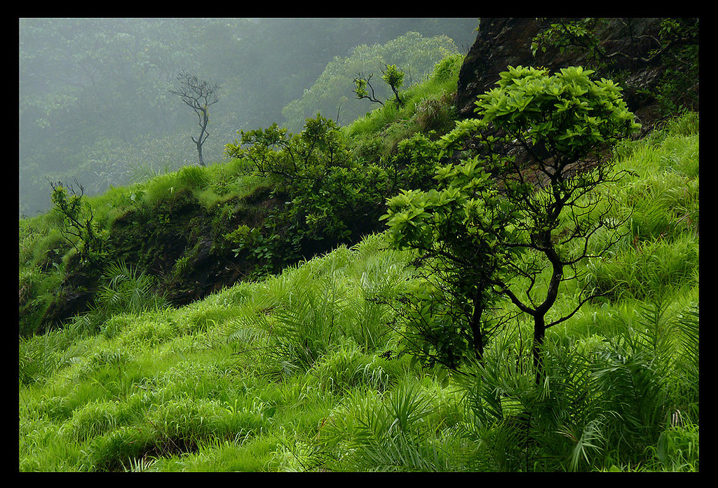 Go green! Kudremukh hills covered in green
