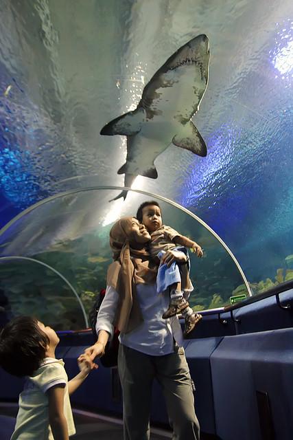 Sharky Scary Lil' Kak Long