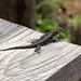 Lizard por frankenschulz