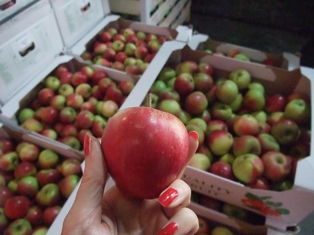 Health Food Wholesalers